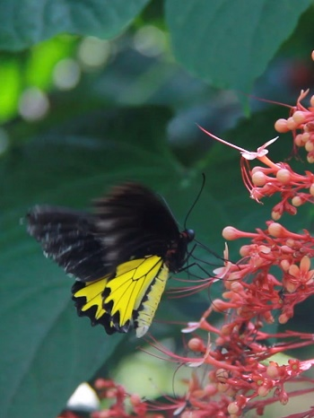 Bali with kids at Kemenuh Butterfly Park