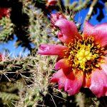 best botanical garden destination