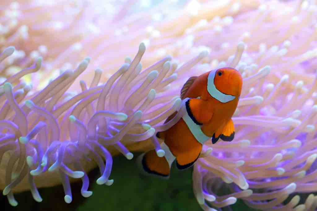 10 Most Impressive Coral Reefs In The World Easy Planet