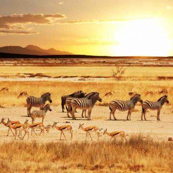 2 | ETOSHA NATIONAL PARK, NAMIBIA