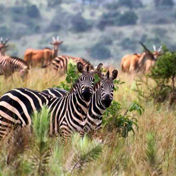 7 | VOLCANOES NATIONAL PARK, RWANDA