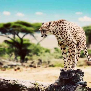 9 | SERENGETI NATIONAL PARK, TANZANIA
