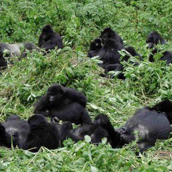 1 | BWINDI IMPENETRABLE FOREST RESERVE, UGANDA