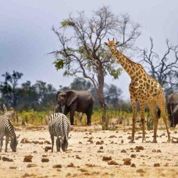 5 | HWANGE NATIONAL PARK, ZIMBABWE