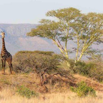 2 | Bush survival skills in Esingeni, South Africa