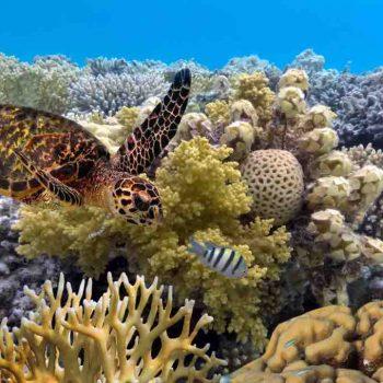 8   Great Barrier Reef, Australia
