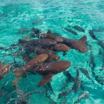 2 | Ambergris Caye, Belize