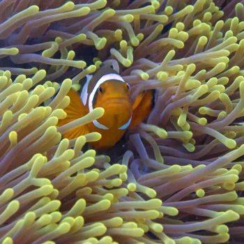 9 | Perhentian Islands, Malaysia