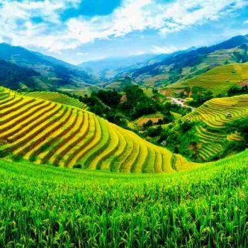 3 | Vietnam