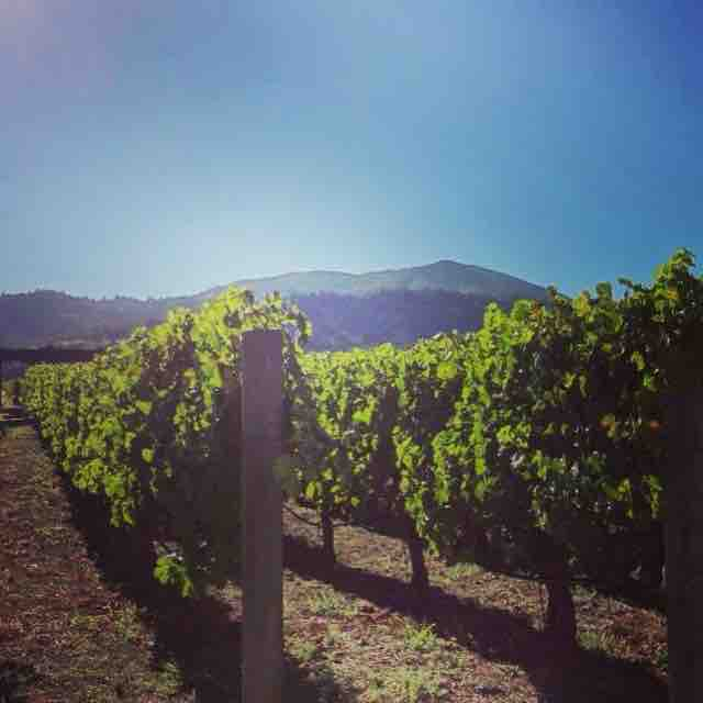 Best wineries | Napa Valley – Robert Mondavi