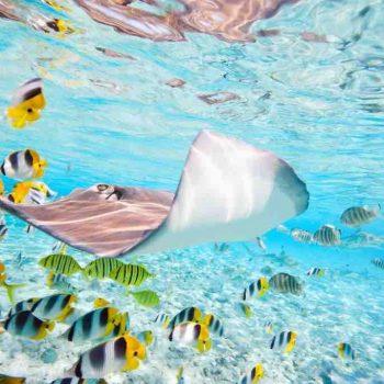 7 |  Bora Bora