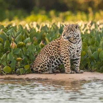 best destinations wildlife