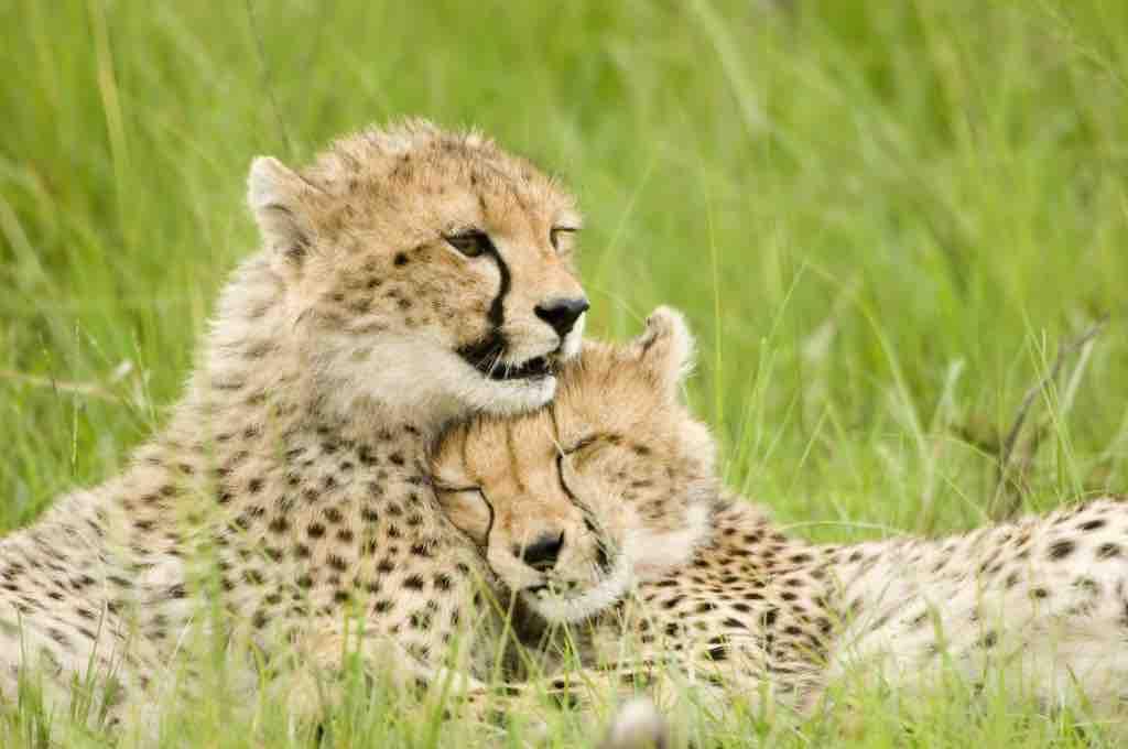10 Best Wildlife Destinations Easy Planet Travel