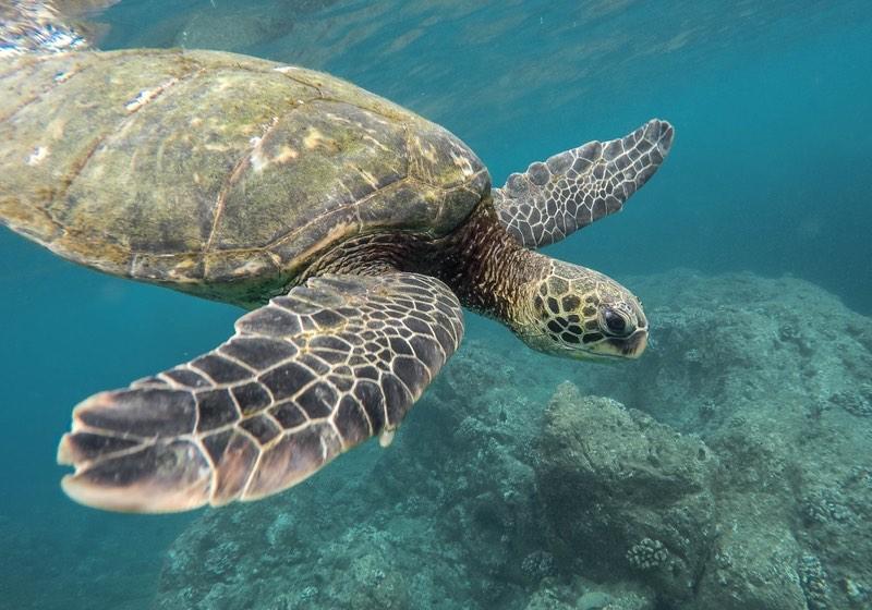Wildlife on the best Hawaiian Islands
