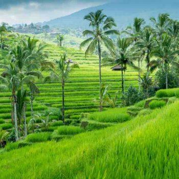 15   Ubud, Indonesia
