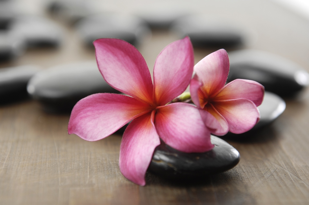 Beautiful zen flower