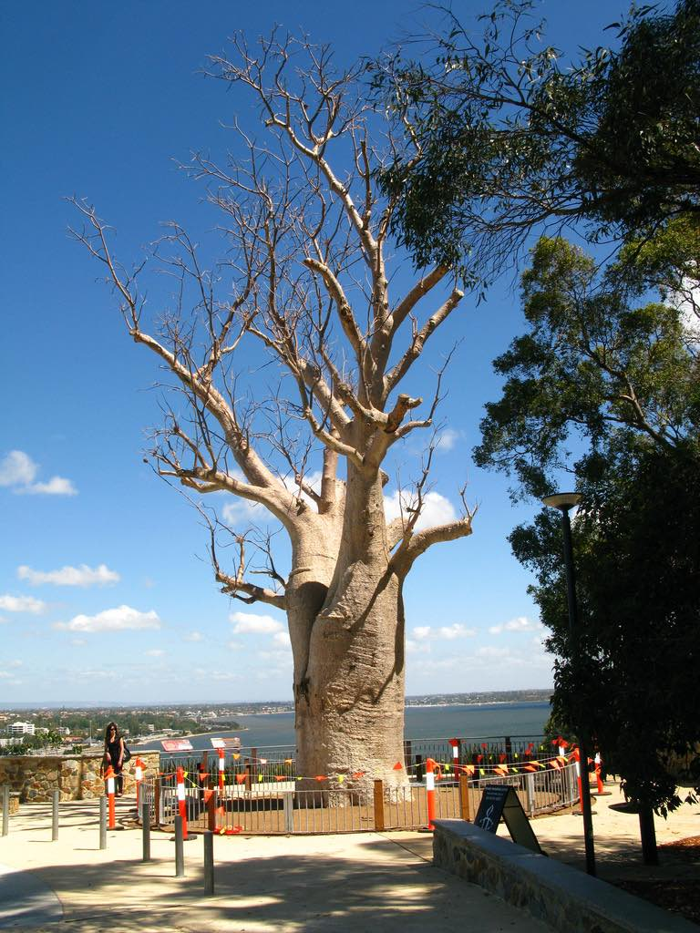 Kings Park and Botanic Garden: one of the best hikes in Australia for kids