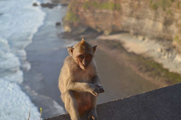 Southern Bali: Monkeys at Uluwatu