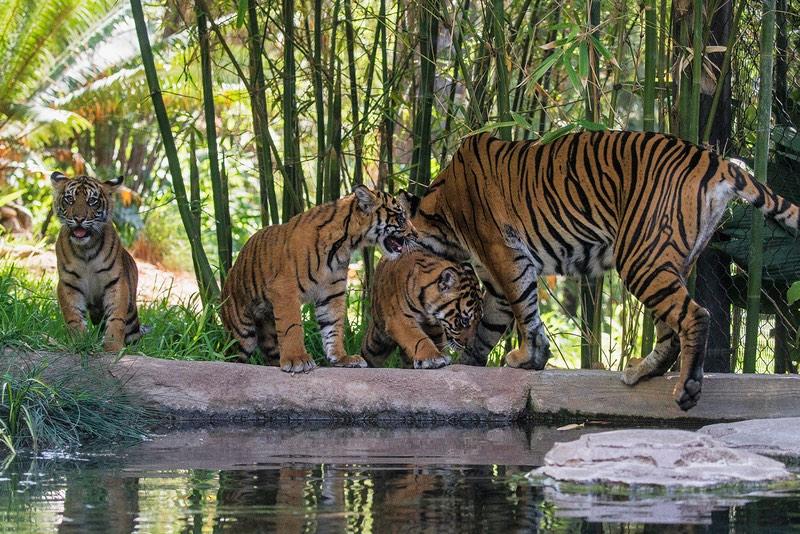 Kids' bucket list: San Diego Zoo