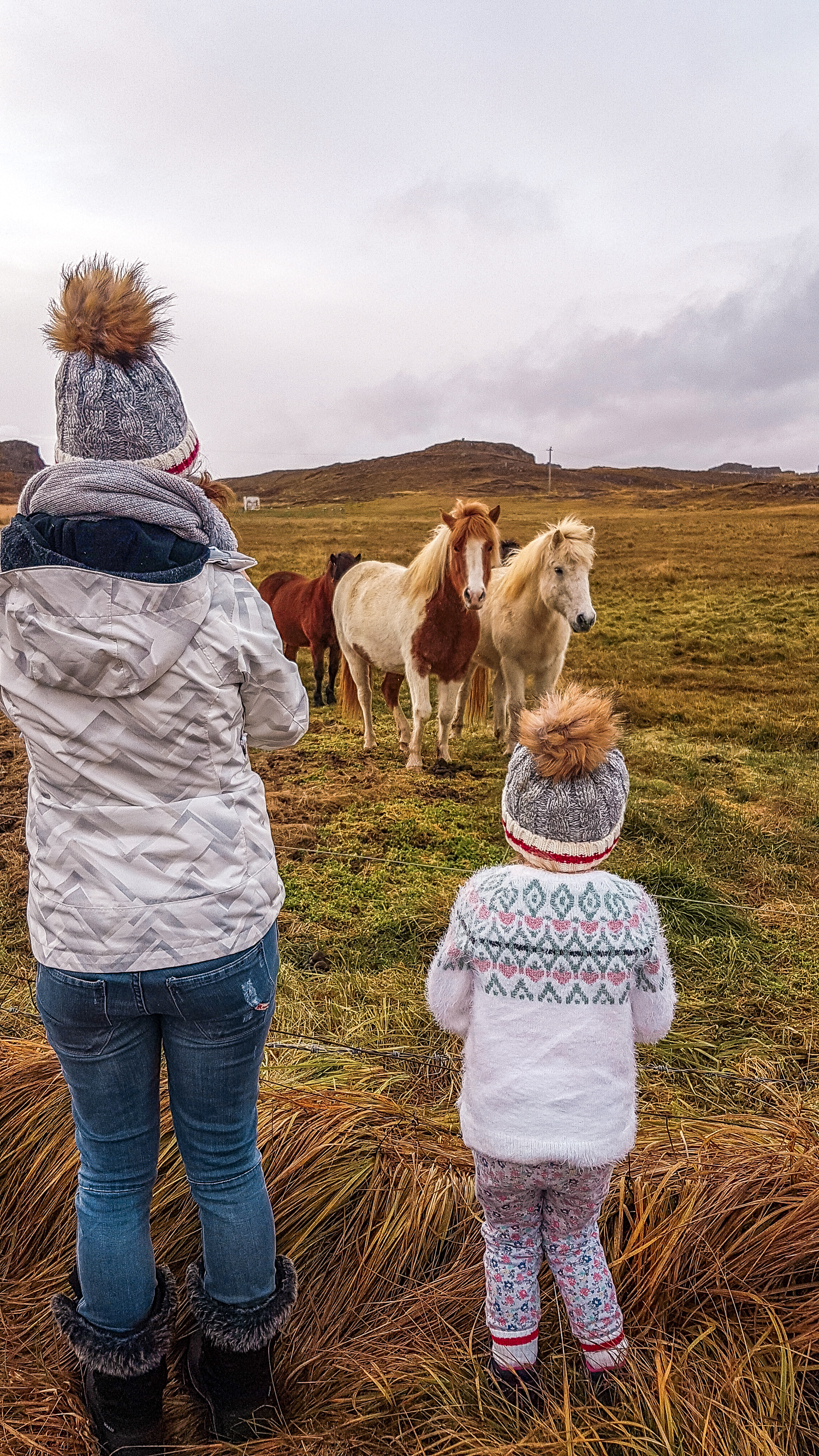 Horse encounter in Iceland
