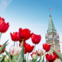 Quoi faire à Ottawa? 30 activités intérieures et extérieures à faire en famille