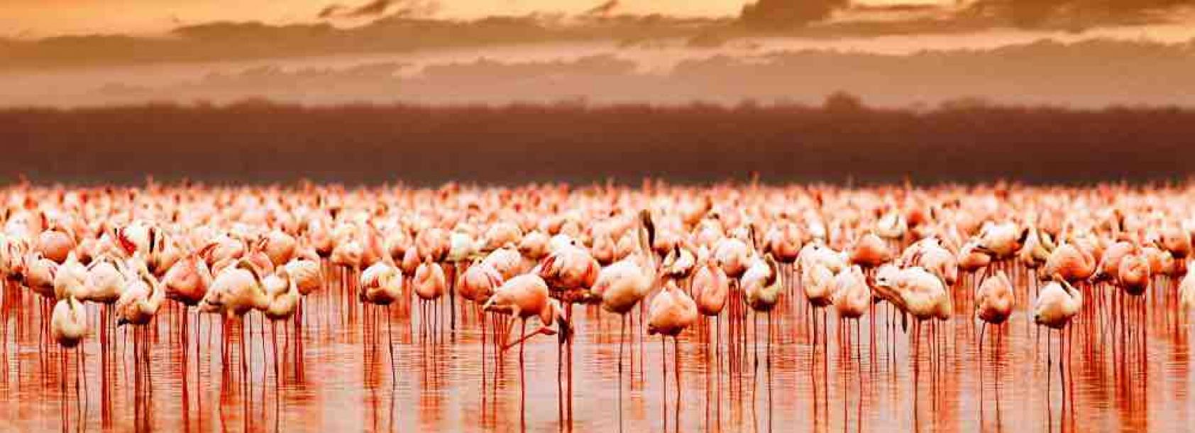 Kenya_Lake Nakuru