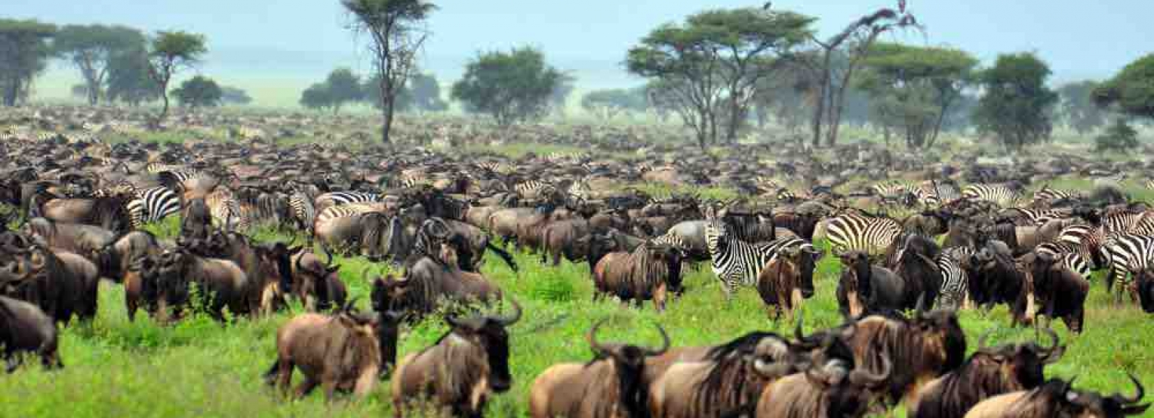 Tanzania_Serengeti Great migration
